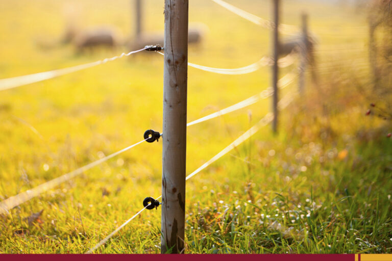 7 cuidados que você precisa ter na instalação de cerca elétrica rural!
