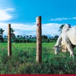 Acessórios para construção rural: 4 motivos para vendê-los na sua agropecuária!