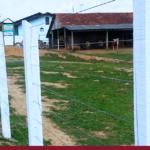 Construção de cerca em terreno rural: o que considerar